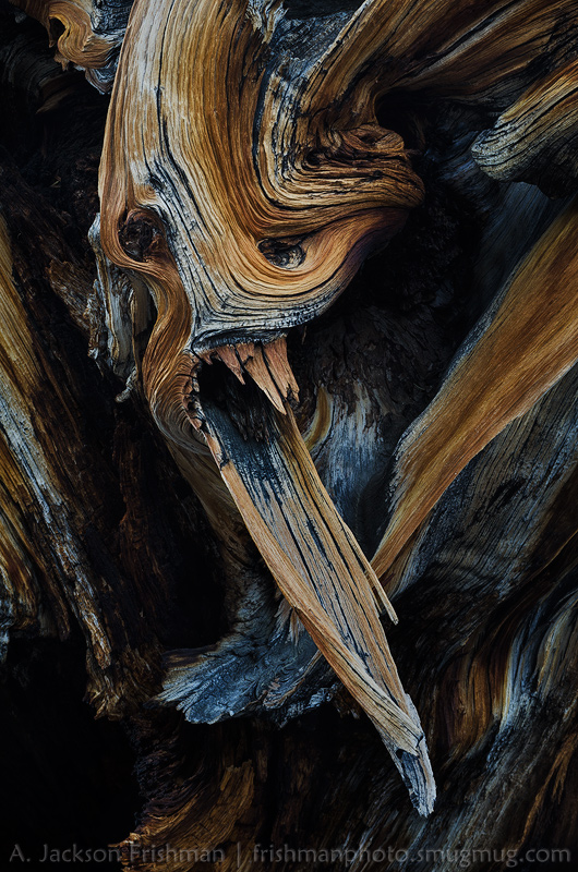 Bristlecone Gargoyle