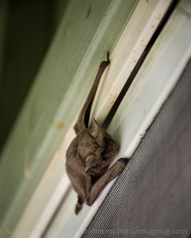 Screen Door Bat