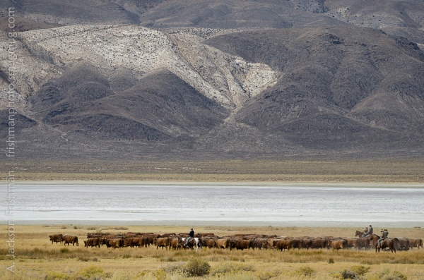 Deep Springs Lake Cattle Drive