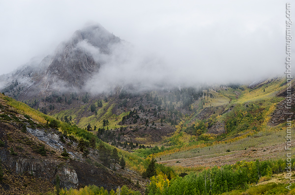 Mist, Mountain and Aspens