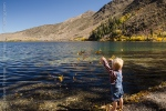 Tossing Leaves in Convict Lake, Eastern Sierra