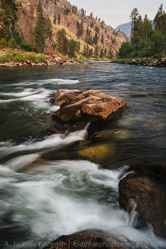 Salmon Flowing