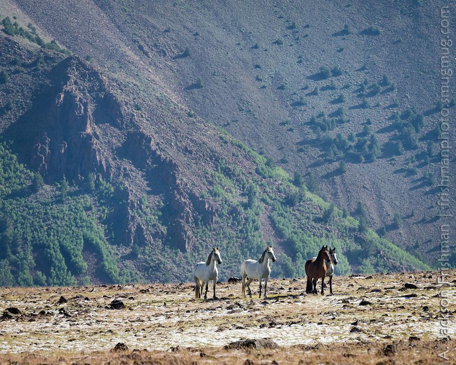 Toquima Horses and Aspens