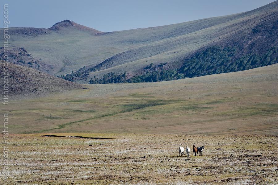 Toquima Horses Basin