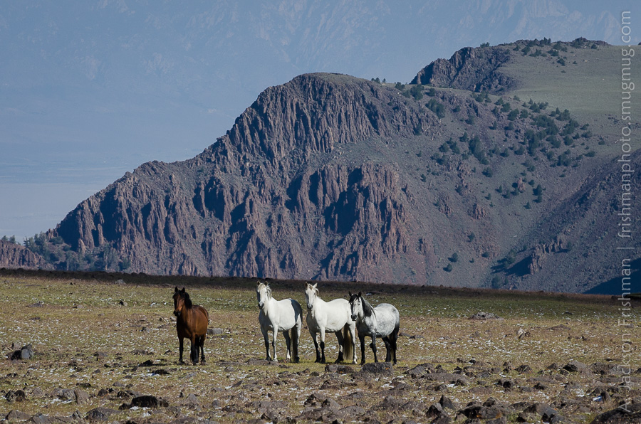 Toquima Horses Cliffs