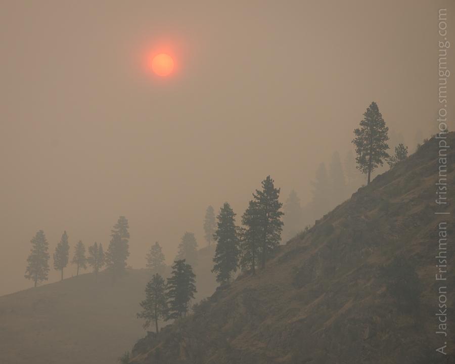 Smoke, Trees, Sun