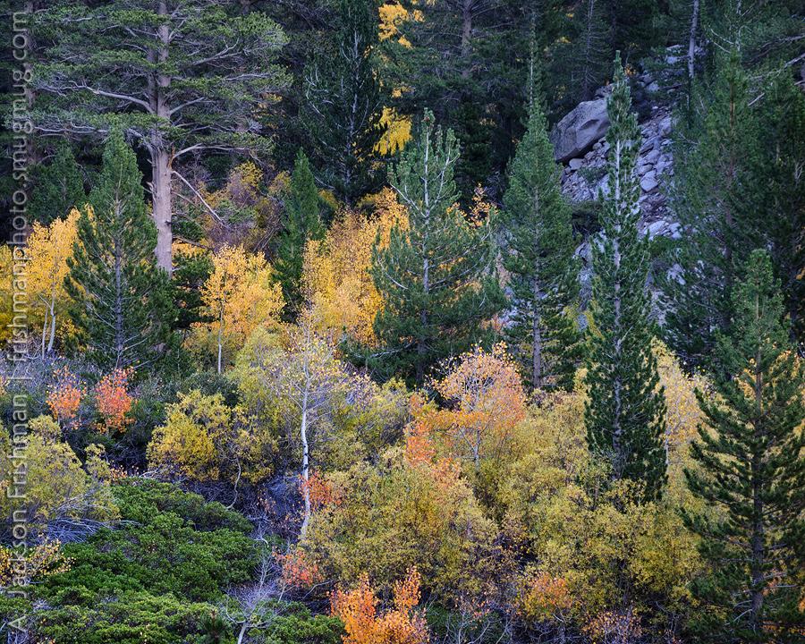 Big Pine Palette