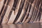 Tiger Wall