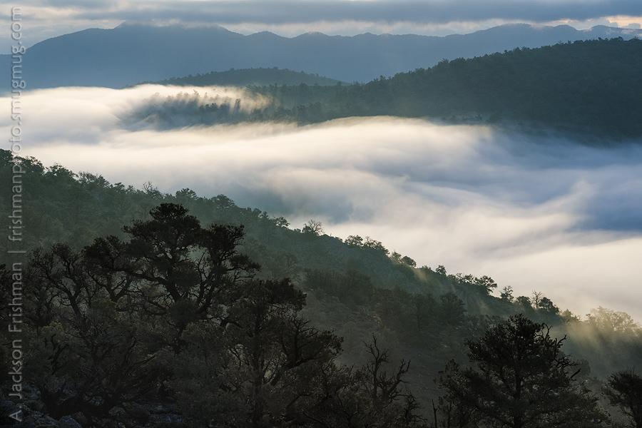 Westgard Fog Bank