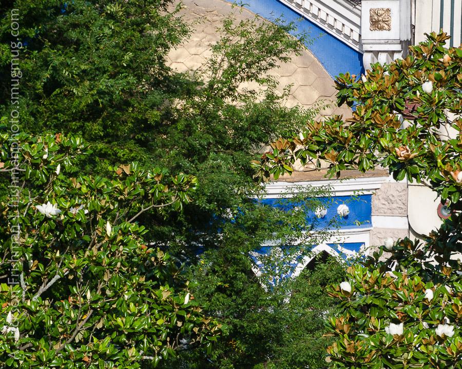 Main Street Magnolias