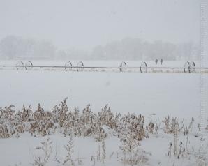 Lower Ranch Snow