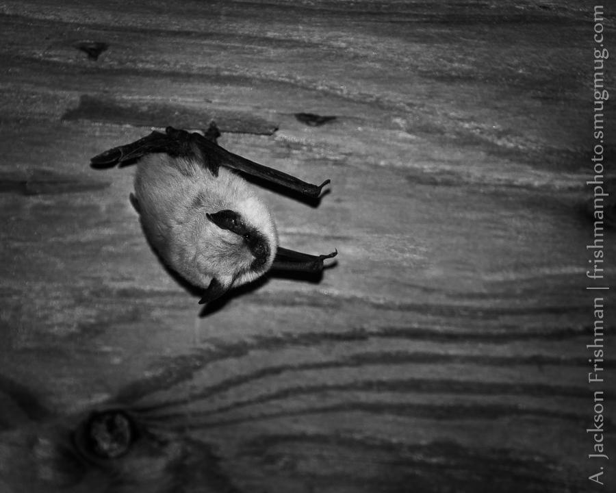 Garage Bat