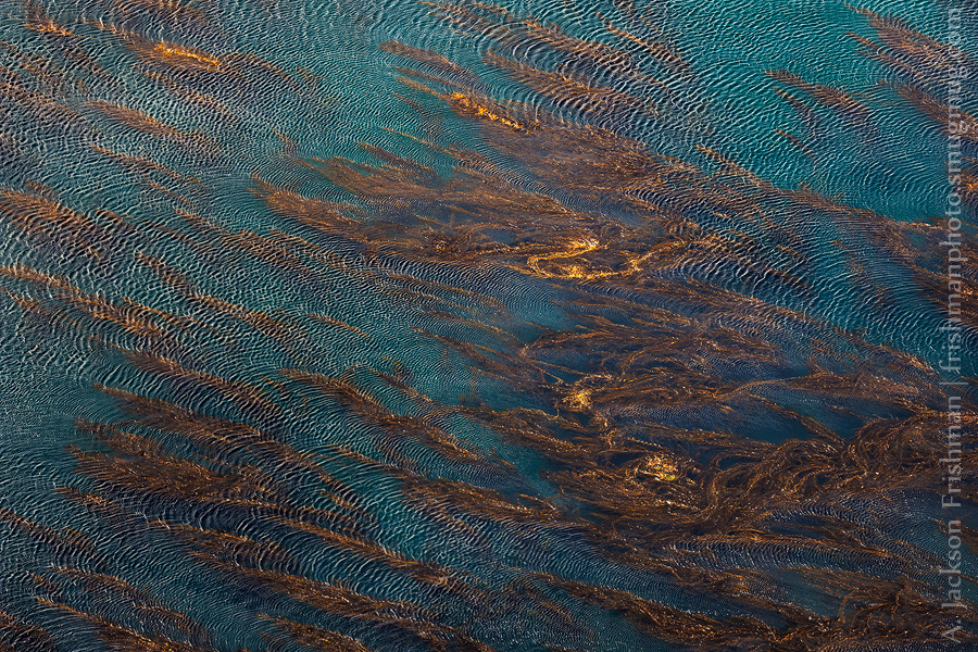 Kelp and Ripples