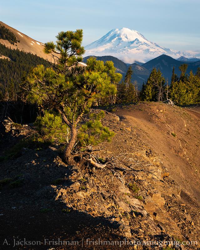 Ridge Pine