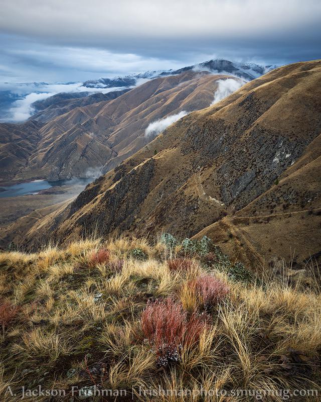 Canyon Grass