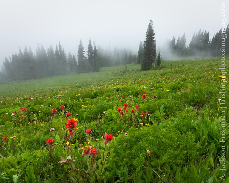 Fog Forest Flowers