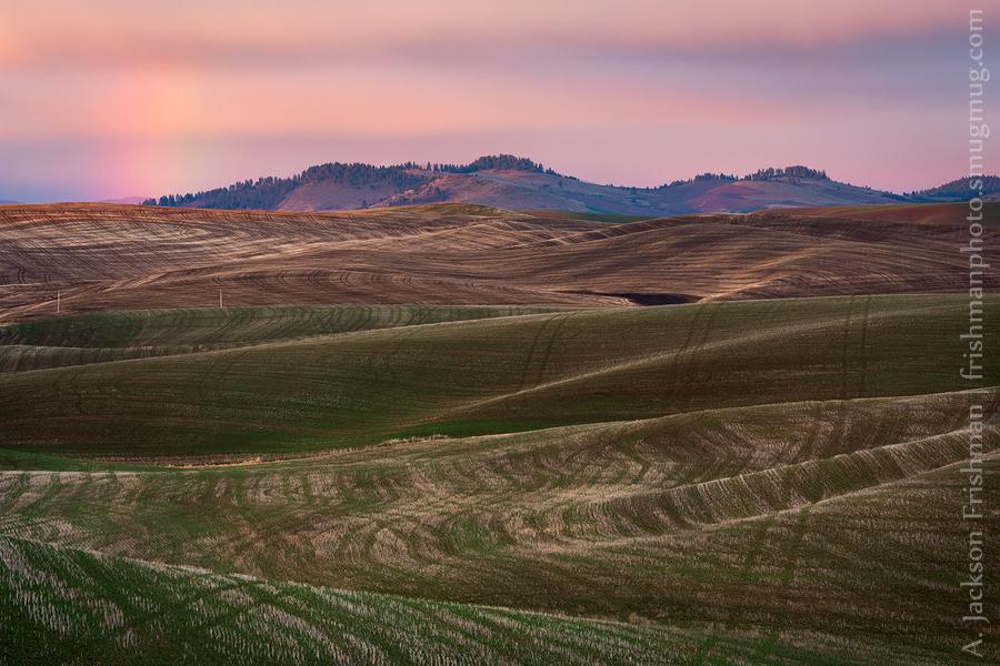 Shining Hills