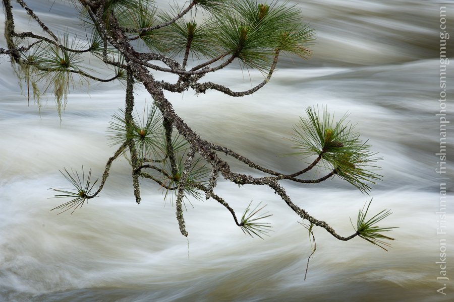 Branch over Whitewater