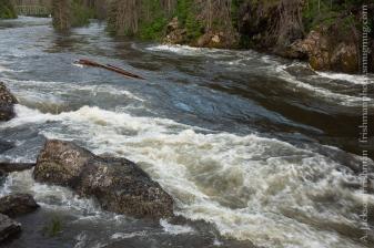 Selway Falls Log 2
