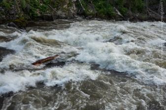 Selway Falls Log 3