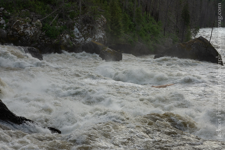 Selway Falls Log 4